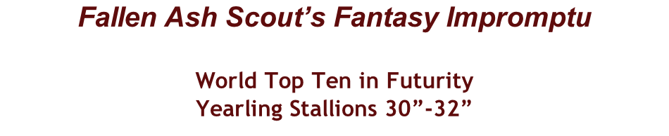 "Fallen Ash Scout's Fantasy Impromptu  World Top Ten in Futurity Yearling Stallions 30""-32"""