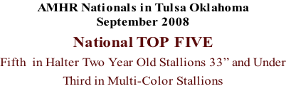 "AMHR Nationals in Tulsa Oklahoma September 2008 National TOP FIVE  Fifth  in Halter Two Year Old Stallions 33"" and Under Third in Multi-Color Stallions"